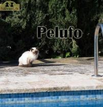 Pelufo