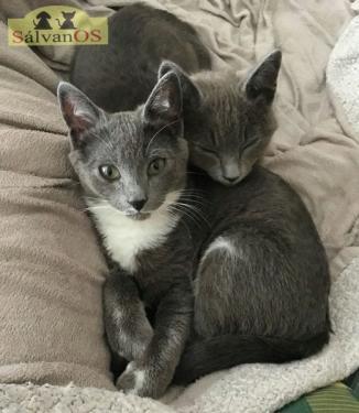 Grey (y Elliot)