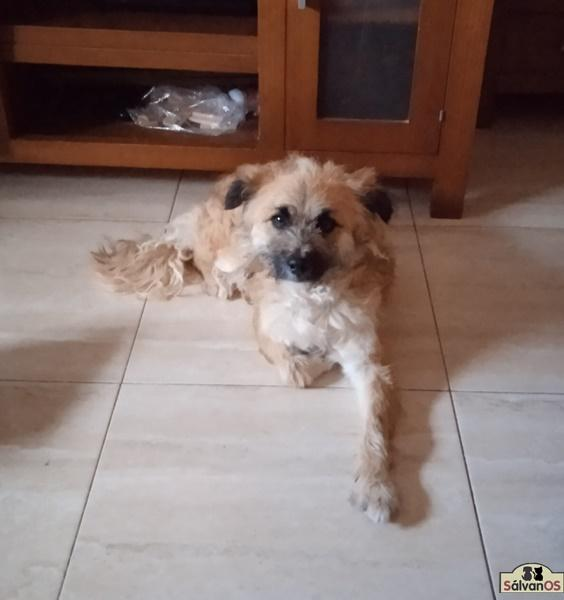 Hugo (Camada Maya)