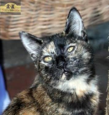 Runa (Camada 4 gatitos)