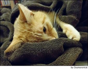 Manchas en la oreja de gato